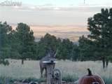8728 Ponderosa Pine Drive - Photo 44