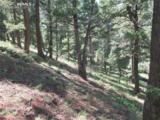 2450 Elk Park Road - Photo 6