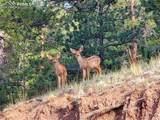 118 Coyote Trail - Photo 34