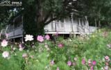 113 Deer Path Avenue - Photo 4