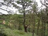 87 Chalk Creek Trail - Photo 14