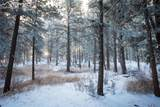 19110 White Pine Lane - Photo 10