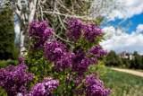 3765 Outback Vista Point - Photo 18