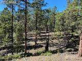 1035 Bison Creek Trail - Photo 9