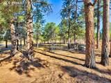 13645 Pinery Drive - Photo 50