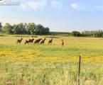 12906 County Road 162 Road - Photo 21