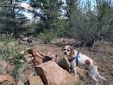 00 42nd Trail - Photo 12