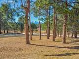 13645 Pinery Drive - Photo 10