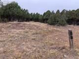 3675 Twisted Oak Circle - Photo 3