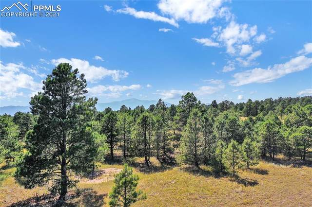 8580 Forest Line Point, Colorado Springs, CO 80908 (#1160974) :: Tommy Daly Home Team