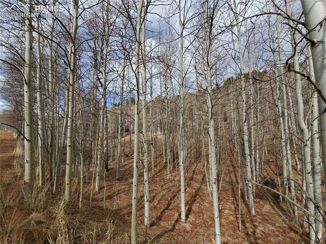 420 Buckhorn Road, Cripple Creek, CO 80813 (#1487488) :: 8z Real Estate