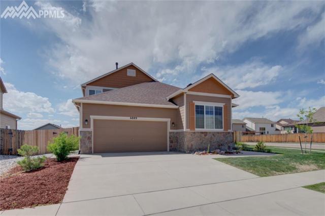 6889 Red Cardinal Loop, Colorado Springs, CO 80908 (#1591437) :: 8z Real Estate