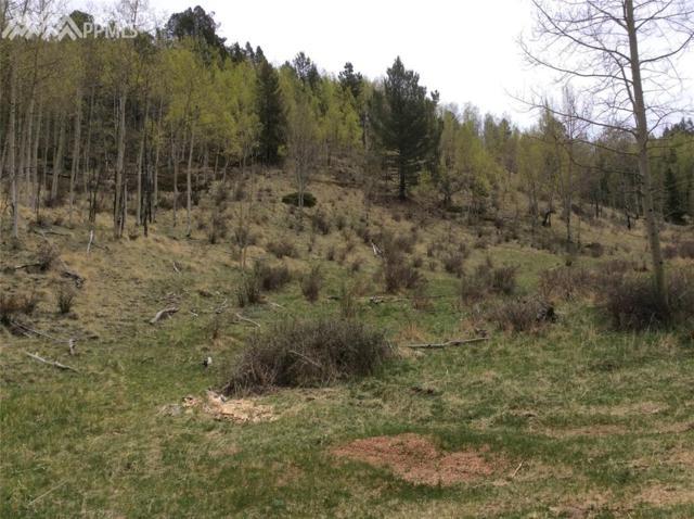 86 Grey Eagle Way, Cripple Creek, CO 80813 (#2613312) :: 8z Real Estate