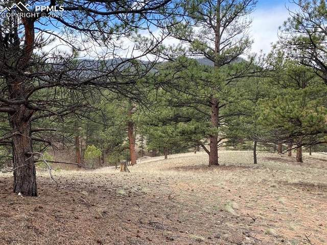 93 Wallace Drive, Florissant, CO 80816 (#2948212) :: Tommy Daly Home Team