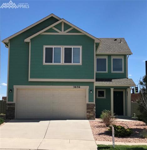 3836 Swainson Drive, Colorado Springs, CO 80922 (#3080492) :: 8z Real Estate
