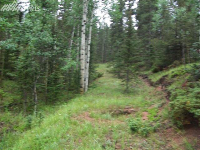 547 Spruce Lake Drive, Divide, CO 80814 (#3160563) :: Jason Daniels & Associates at RE/MAX Millennium