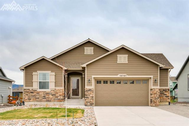 16767 Buffalo Valley Path, Monument, CO 80132 (#3403093) :: 8z Real Estate