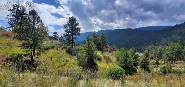 11070 W Highway 24 Highway, Cascade, CO 80819 (#3691977) :: Tommy Daly Home Team