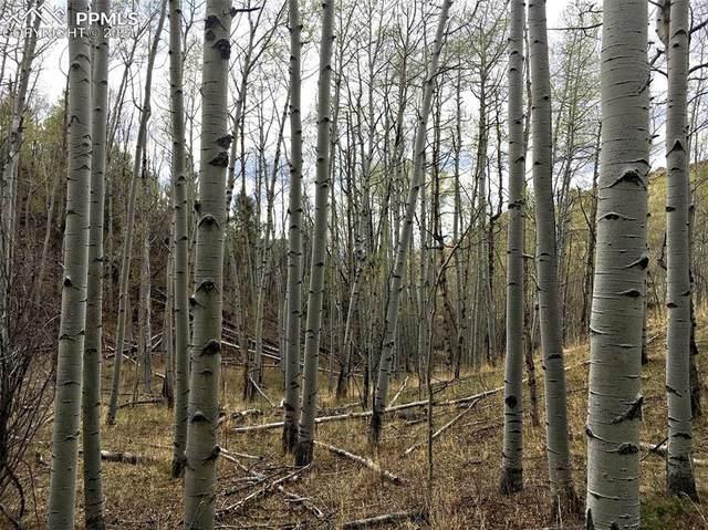 498 Buckhorn Road, Cripple Creek, CO 80813 (#3913739) :: Hudson Stonegate Team