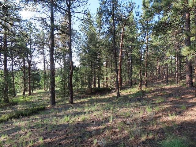 84 Indian Creek Road, Divide, CO 80814 (#3976993) :: Action Team Realty