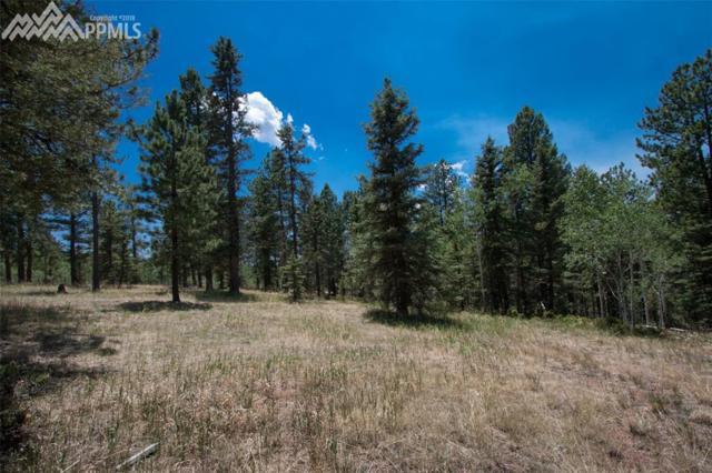 381 Black Bear Drive, Divide, CO 80814 (#4216116) :: 8z Real Estate