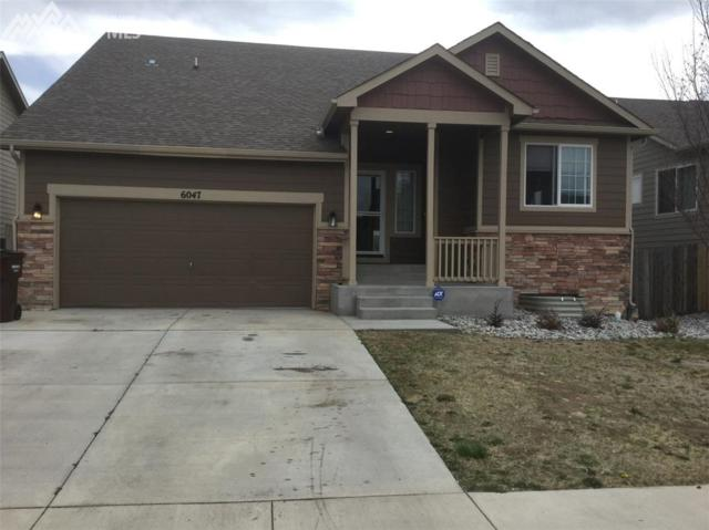 6047 San Mateo Drive, Colorado Springs, CO 80911 (#4432831) :: Action Team Realty