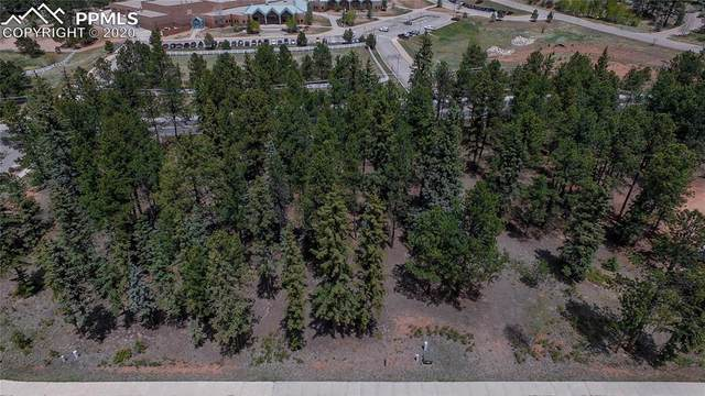610 Chipmunk Drive, Woodland Park, CO 80863 (#4585935) :: Tommy Daly Home Team