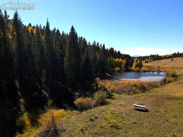 4195 Cedar Mountain Road, Divide, CO 80814 (#4747745) :: The Daniels Team