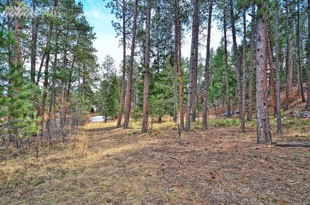 1145 Lone Scout Lookout, Monument, CO 80132 (#4920614) :: 8z Real Estate