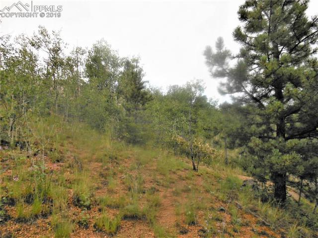 113 Buckhorn Road, Cripple Creek, CO 80813 (#4978014) :: The Treasure Davis Team