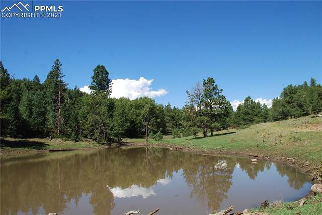 Peakview Ridge, Canon City, CO 81212 (#5060865) :: Tommy Daly Home Team