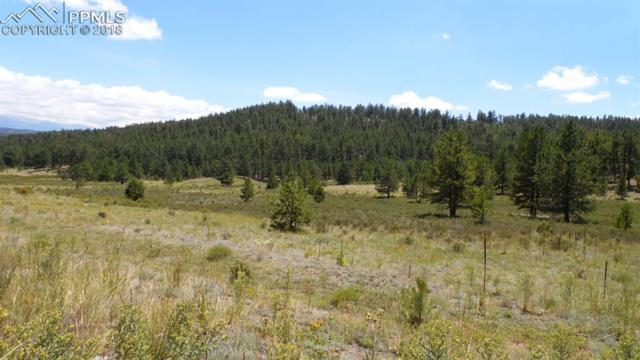 4095 Doe Valley Road, Guffey, CO 80820 (#5321946) :: Action Team Realty