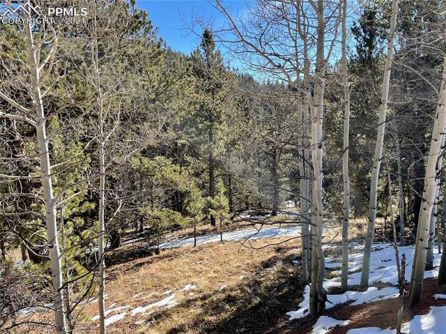 466 Valley Road, Divide, CO 80814 (#5491768) :: The Dixon Group
