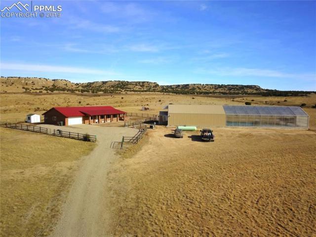7036 Wildflower Road, Pueblo, CO 81004 (#6044994) :: Action Team Realty