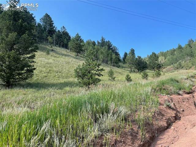 113 Beaver Pond Road, Divide, CO 80814 (#6210444) :: Tommy Daly Home Team