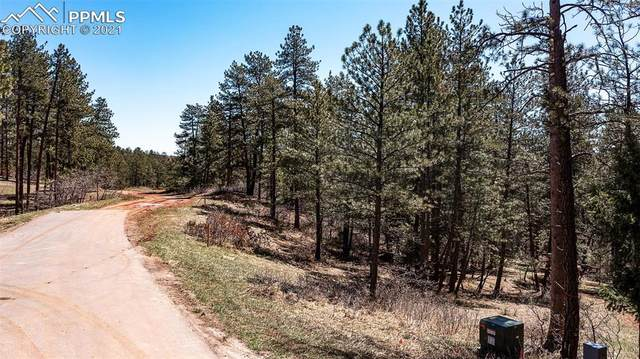 8173 Bannock Drive, Larkspur, CO 80118 (#6823715) :: Action Team Realty