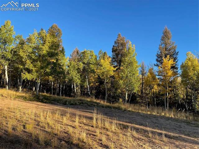 126 Cheyenne Way, Florissant, CO 80816 (#6917821) :: Tommy Daly Home Team
