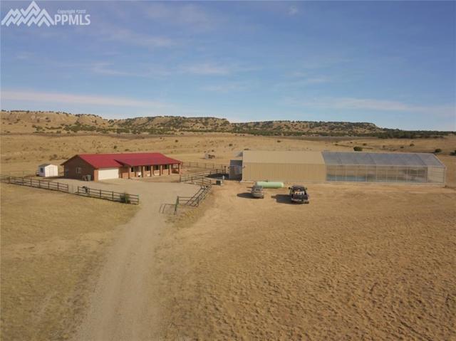 7036 Wildflower Road, Pueblo, CO 81004 (#7000549) :: Colorado Home Finder Realty