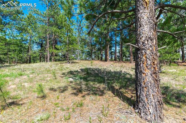 1610 Trumpeters Court, Monument, CO 80132 (#7715830) :: The Daniels Team