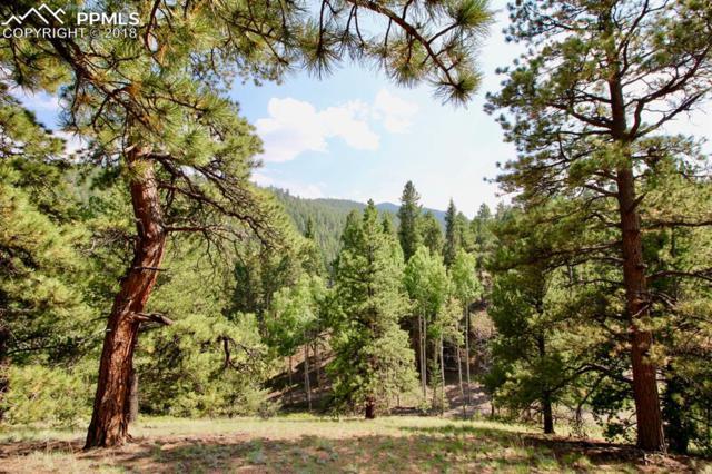 2700 Elk Ridge North, Divide, CO 80814 (#7796826) :: Action Team Realty