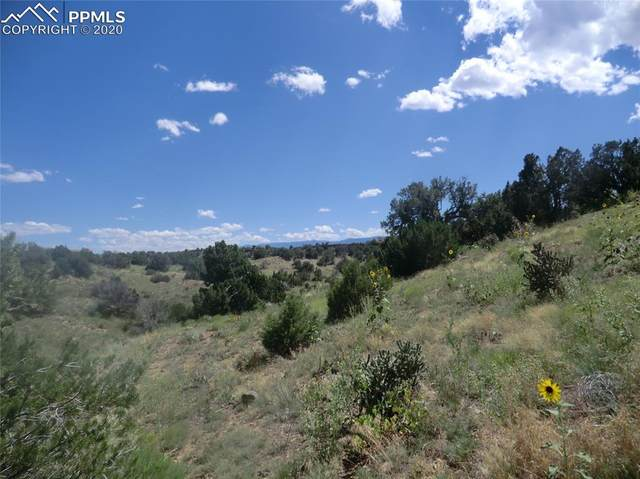 1239 Canon Ridge Road, Canon City, CO 81212 (#8045896) :: Finch & Gable Real Estate Co.