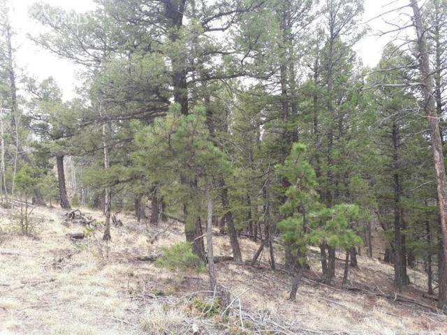 1000 Bennett Drive, Cripple Creek, CO 80813 (#8134631) :: 8z Real Estate