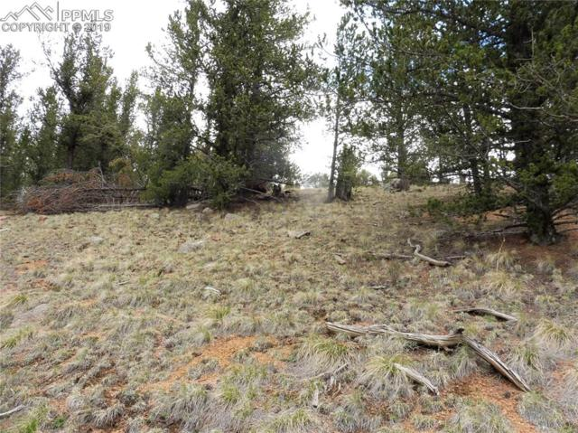 71 Brown Bear Lane, Cripple Creek, CO 80813 (#8365448) :: Fisk Team, RE/MAX Properties, Inc.