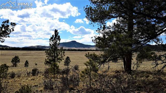 2470 Doe Valley Road, Guffey, CO 80820 (#8719058) :: Venterra Real Estate LLC