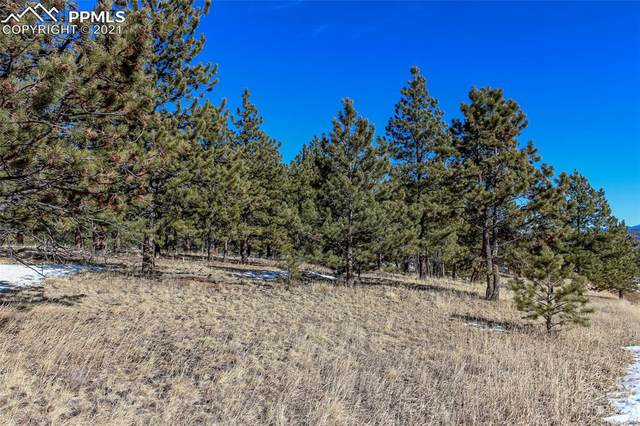 141 Pike View Road, Lake George, CO 80827 (#8796858) :: 8z Real Estate