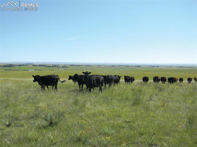16771 Highway 94 Highway, Colorado Springs, CO 80930 (#8871381) :: Action Team Realty