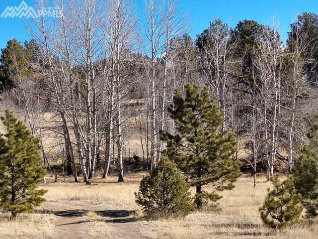 99 Mountain Lane, Guffey, CO 80820 (#8943282) :: 8z Real Estate
