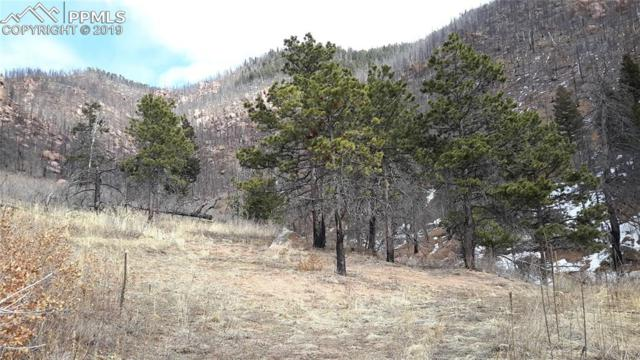 8210 Bear Dance Heights, Cascade, CO 80809 (#9230523) :: The Peak Properties Group