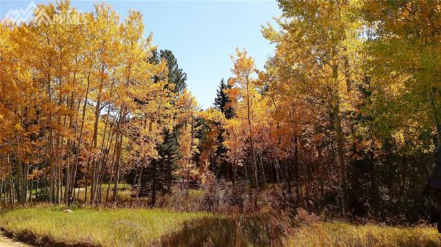 86 Bear Creek Drive, Florissant, CO 80816 (#9389550) :: 8z Real Estate