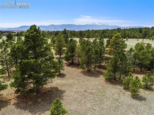8585 Forest Line Point, Colorado Springs, CO 80908 (#9766860) :: CC Signature Group